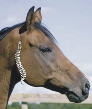 Praxis_horse